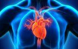 اولین نشست تخصصی هئیت مدیره انجمن قلب خوزستان برگزار شد/خسروی: ۴۶ درصد مرگ و میر در ایران بر اثر عارضه قلبی است/کاشانی: استعمال سیگار و مصرف چربی زیاد عامل اصلی بیماری های قلبی